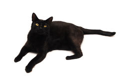 Black cat looking up. Black cat with yellow eyes looking up over white background Royalty Free Stock Image