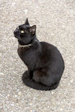 Black cat looking up Royalty Free Stock Images