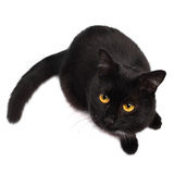 Black cat looking up Royalty Free Stock Photography
