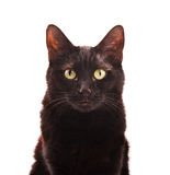 Black cat looking up, on white Stock Image