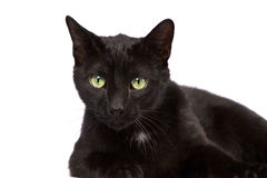 Black Cat Looking At You Royalty Free Stock Image