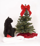 Black cat looks at Christmas tree Royalty Free Stock Photo