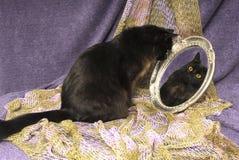 Black Cat Looks into Mirror Stock Image