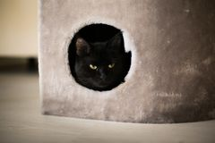 A black cat looks out of his home stock photos