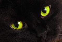 Black cat looks at you with bright green eyes.  Stock Images