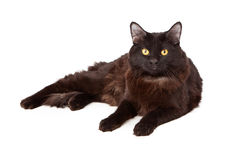 Black cat lounging Stock Photography