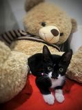 Black cat. Lovely black cat royalty free stock photo