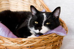 Black cat lying in a basket with  pillow Stock Photography