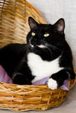 Black cat lying in a basket with pillow Royalty Free Stock Images