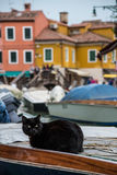 Black cat lying on a boat. In Murano, Italy Stock Image