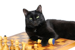 Black cat lying on the chessboard with figures isolated on white Stock Photography