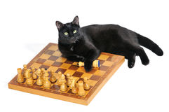 Black cat lying on the chessboard with figures isolated on white Royalty Free Stock Photo