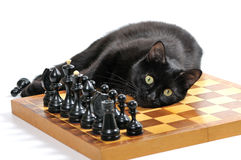 Black cat lying on the chessboard with figures isolated on white Royalty Free Stock Photos