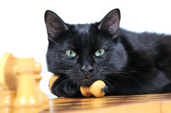 Black cat lying on the chessboard looking at the camera Royalty Free Stock Images