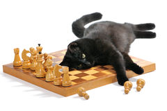Black cat lying on the chessboard playing with figures Royalty Free Stock Images