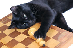 Black cat lying on the chessboard playing with figures Royalty Free Stock Photos