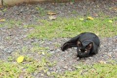 Black cat lying Stock Image