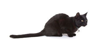 Black cat lying isolated Stock Images