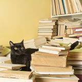 Black cat lying in a pile of books. Selective focus. Black cat lying in a pile of books. A part of the bookshelf is visible. Selective focus royalty free stock image