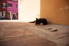Black cat lying on the road. In Venice Stock Image