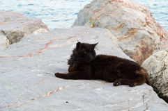 Black Cat Lying on the Rocks Stock Photos