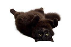 Black cat lying on it's back. Isolated Royalty Free Stock Photos