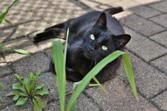 Black cat lying in the shade. Wonderful black cat relaxing in the shade stock photo
