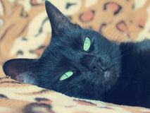 Black cat lying Royalty Free Stock Photography
