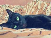 Black cat lying Royalty Free Stock Images