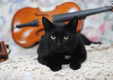 Black cat lying on the violin background Royalty Free Stock Images