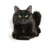 Black cat lying on a white background, looking at camera.  stock photos