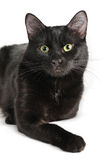Black cat lying on a white background, looking at camera Stock Image