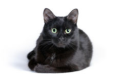 Black cat lying on a white background, looking at camera Royalty Free Stock Image