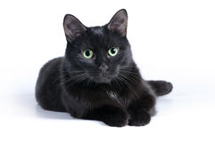 Black cat lying on a white background, looking at camera Royalty Free Stock Photo