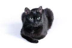 Black cat lying on a white background Stock Image