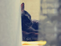 Black cat lying. On a window Royalty Free Stock Photos