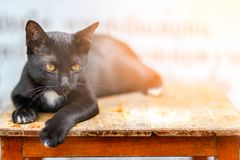 Black cat lying royalty free stock photo