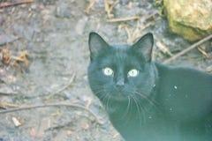 Black cat marsik , royalty free stock images
