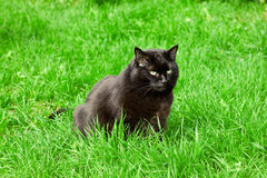 Black cat in a meadow. Black cat sitting in a meadow stock image