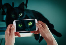 Black cat mobile shot Royalty Free Stock Photos