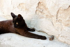 Black cat and mouse in a hunter - prey relation Royalty Free Stock Photo