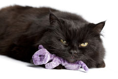Black cat with mouse toy. Isolated Royalty Free Stock Photo