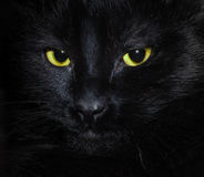 Black cat. Muzzle a black cat in the dark Royalty Free Stock Images