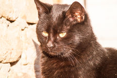 Black cat near a brick wall Royalty Free Stock Photo