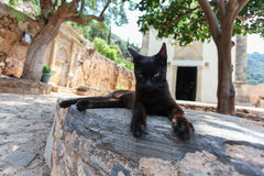 Black cat near the stone Greek church. Island Crete. Greece Royalty Free Stock Photography