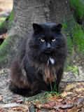 Black cat next to the tree Stock Photos