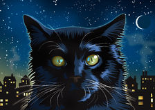 Black Cat at Night Royalty Free Stock Photography