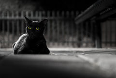Black cat by night Stock Image