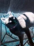 Black cat, no color. Black cat, invert colors, creepy Royalty Free Stock Photos