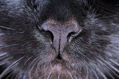 Black cat nose. Macro shooting Stock Photos